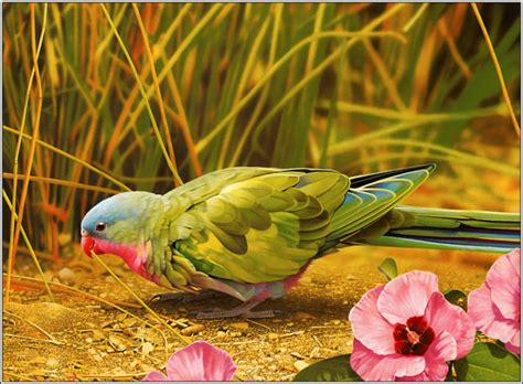 Animal And Bird Hd Wallpaper - 3d and hd birds flying angry picture wallpapers free