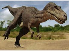 Gorgosaurus Facts and Pictures
