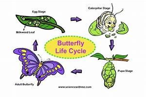 Students Raise Butterflies