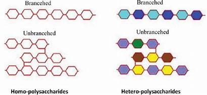 Polysaccharides Homo Types Hetero Diagram General Monosaccharide