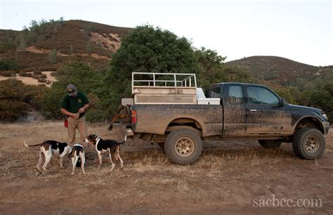 dog hunting truck new law banning dogs in bear hunting has immediate impact