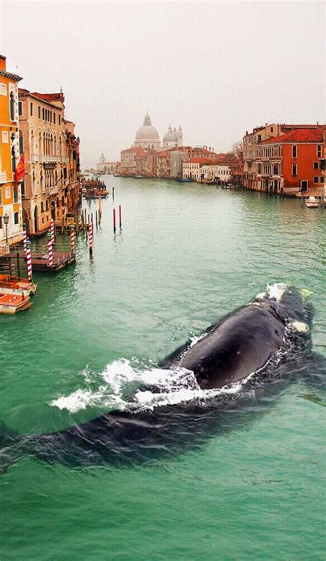 What the  is a whale doing swimming in the Venice canal?   Roadtrippers