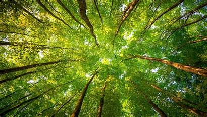 Canopy Tree Worm Leaves Trees Forest Eye