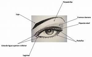 Curso De Maquillaje  Leccion 1 Partes Del Ojo