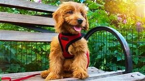 In the World of Cute Canines, These Adorable Mixed Breeds ...