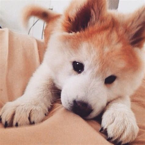 Pinterest Nuggwifee☽ ☼☾ Animals Animals Cute Animals