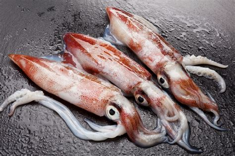 experts reveal  nutritional quality  fish  squid