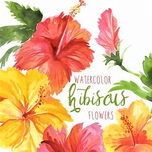Watercolor Hibiscus Flowers Tropical Flower Clipart Hawaiian