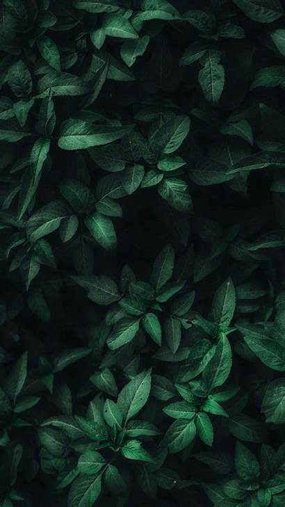 Leaves Leaf Dark Plant Backgrounds Wallpapers Iphone