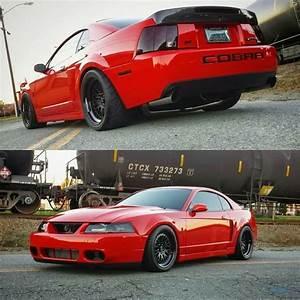 04 Mustang Cobra Weight Loss - cloudsgala