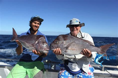 Fishing Boat Hire Geraldton by An Abrolhos Islands State Of Origin Week 8 2016 Blue