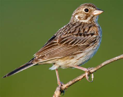 sparrow advisory consulting and advisory services