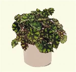 Euphorbia Trigona Vermehren : mutterpflanzenlistentalk treffpunkt stammtisch green24 hilfe pflege bilder ~ Orissabook.com Haus und Dekorationen