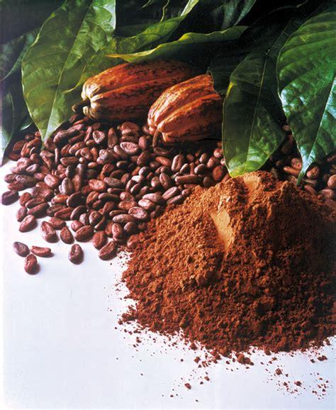 kakao nedir bilgiustam
