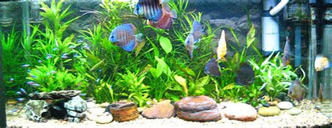 land and water aquarium lab 2 density help page
