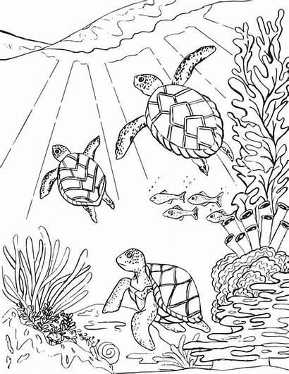 Turtle Coloring Sea Turtles Printable Ocean Animals