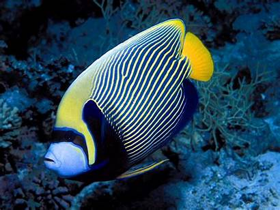 Fish Saltwater Fishes Wallpapers Sea Water Marine