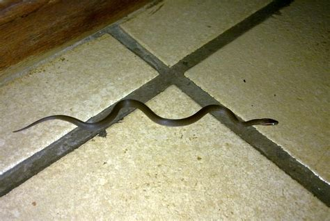 sterkfontein snakes sterkfontein country estates