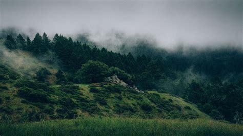 picture landscape tree fog sky nature mountain