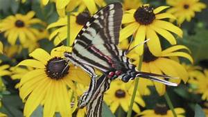 Insect Information   How Butterflies Reproduce