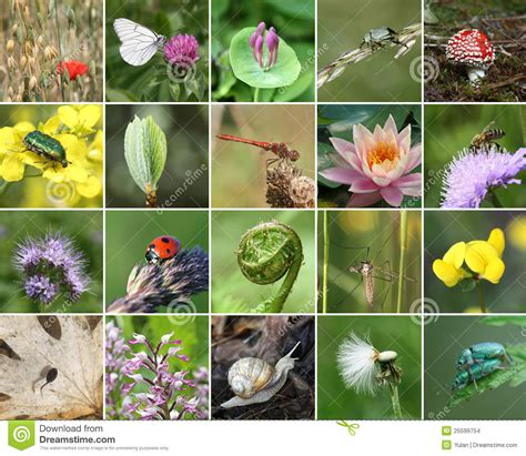 biodiversity collage stock photo image  insect leaf