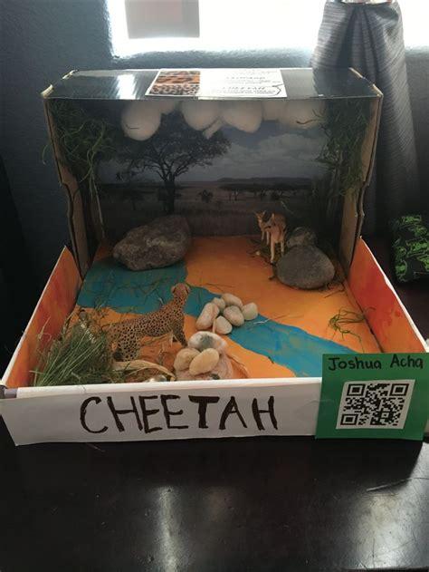 st grade cheetah diorama habitats projects