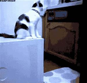 Hump Day GIFs - Primo GIF - Latest Animated GIFs