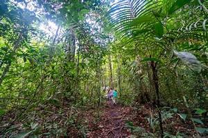 The Amazon Rainforest With Kids  A Magical  Unplugged