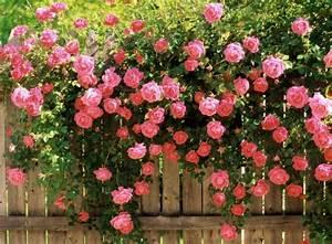 Support Pour Rosier Grimpant : support pour rosier grimpant palissade jardin ~ Premium-room.com Idées de Décoration