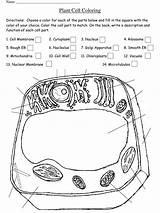 Cell Coloring Worksheet Plant Key Template Pdf Prokaryotic Printable Templateroller 2637 sketch template