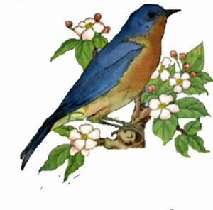 Oiseau Jaune Et Bleu : oiseau bleu voir ~ Melissatoandfro.com Idées de Décoration