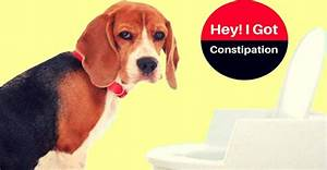 constipated dog symptoms and treatment