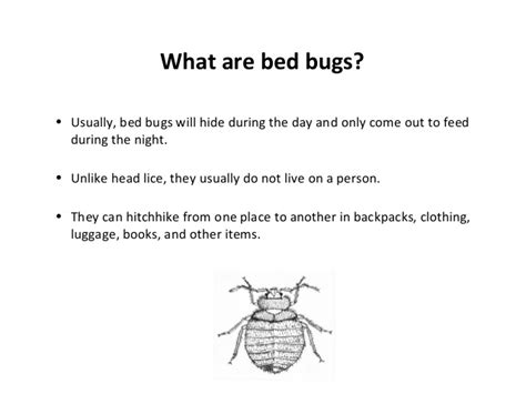 do bed bugs come out when the lights are on bed bugs in schools