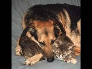 Funny Cat and Dog Love stories moment - YouTube