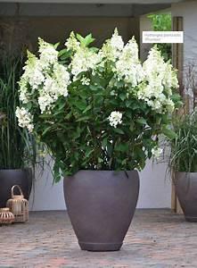 Winterharte Gräser Balkon : asiaterrasse xxl pflanzen planters containers flower boxes pinterest ~ Buech-reservation.com Haus und Dekorationen