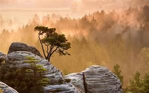 Trees, Forest, Mountains, Mist, Fog, Sunrise, Sunset, Sunlight