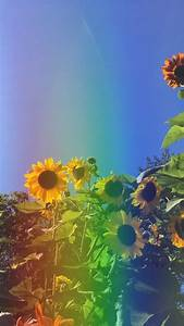 aesthetic, spring, flowers, wallpapers
