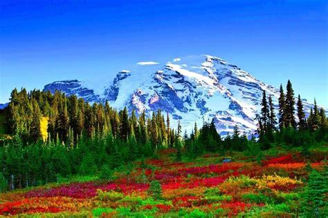 printemps fleurs  des arbres dans la montagne nature