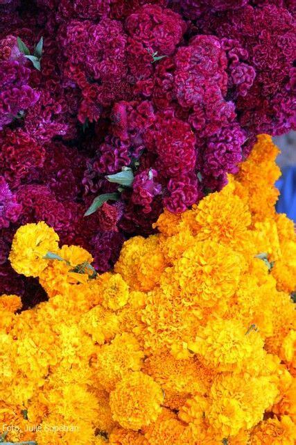 flores de cempasuchil mexico  su color pinterest