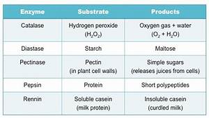 How Does Substrate Volume Affect Enzyme Activity Ph ...
