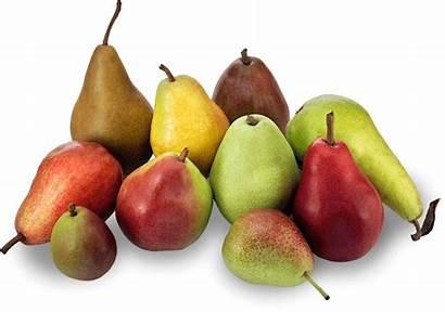 Pear Pears Varieties Ten Usa