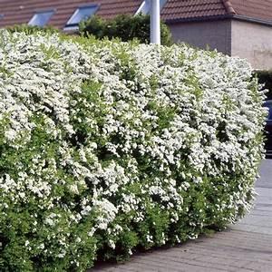 4 Jahreszeiten Hecke : die besten 17 ideen zu heckenpflanzen auf pinterest ~ Lizthompson.info Haus und Dekorationen