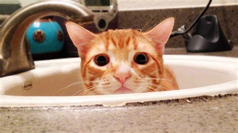 a cats guide to bathrooms youtube