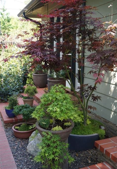17 Best Images About Japanese Maples In Containers On