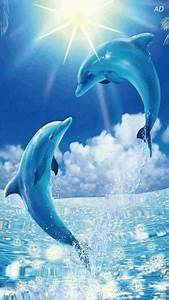 Free Animated Dolphins mobile wallpaper by paula on ...