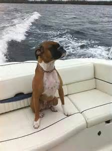 Boxer Dog Boating Pictures