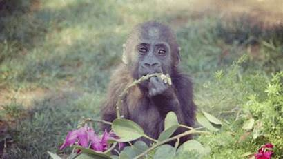 Gorillas Adopt Adorable Wish Could Ll Sheknows