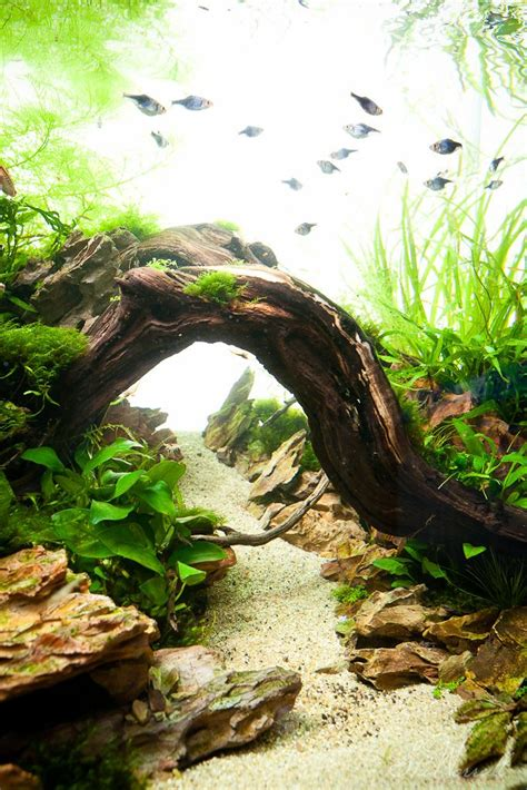 aquascaping planted tank 13362 best aquascape images on