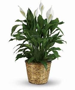 Top 10 indoor low maintenance plants - GreenMyLife ...