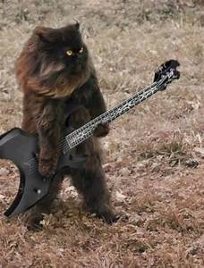 Cat playing a guitar - Dr. Heckle